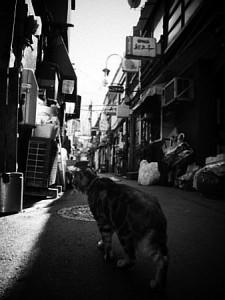 shinya009_07